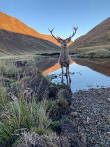 Alladale Wilderness Reserve - chicscotland.com
