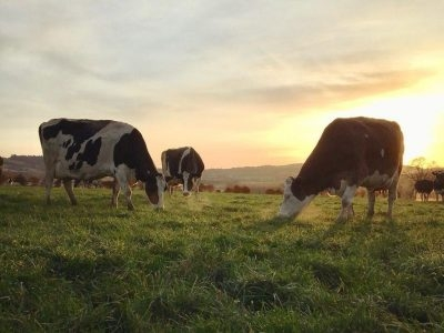 Forest Farm - The Organic Dairy