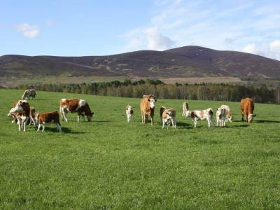 Chic Scotland - Finzean Farm Shop